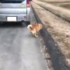 度重なる高齢ドライバ問題。岡山県にて、今度は車を使って犬の散歩&歩道を走る異常な