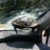 マリオカートの世界?アメリカにて高速道路を走行中に亀がフロントガラスに刺さってき