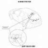 トヨタ新型「カローラ・スポーツ/カローラ・ツーリング」にリコール!ブレーキをゆっ